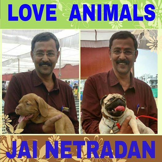Save Animals,Love Animals